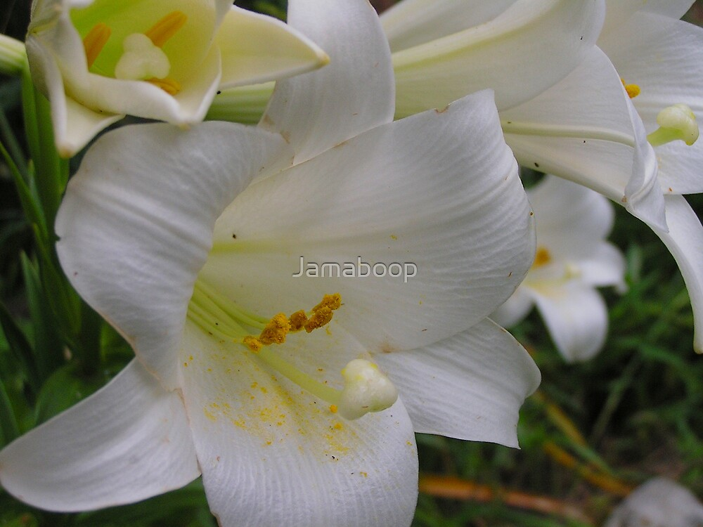 End of May Easter Lilies by Jamaboop