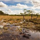 Swamp by Mikis-Workshop