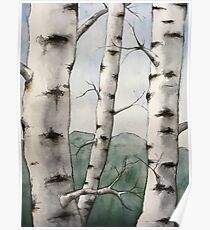 Watercolor Birch Tree Forest Poster