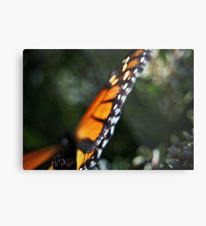 Butterfly Bokeh Metal Print