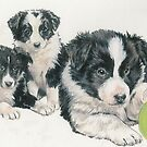Border Collie Puppies by BarbBarcikKeith
