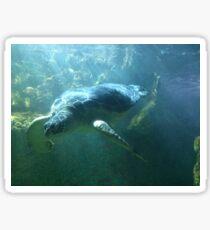 Underwater Turtle Sticker