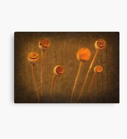 Honey Pots... Canvas Print