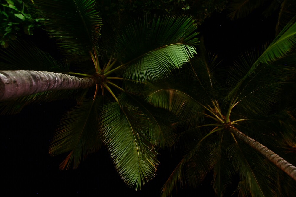 palm trees at night by jameswalker