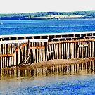 Pilings in the Charlottetown Harbour,PEI CANADA by Shulie1