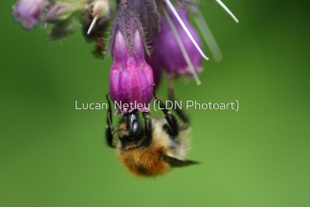 busy busy.......... by Lucan  Netley (LDN Photoart)