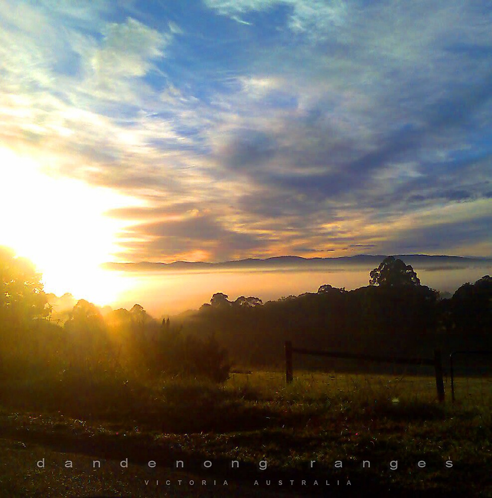 Dandenong Ranges on the fly by Erica Klodinsky