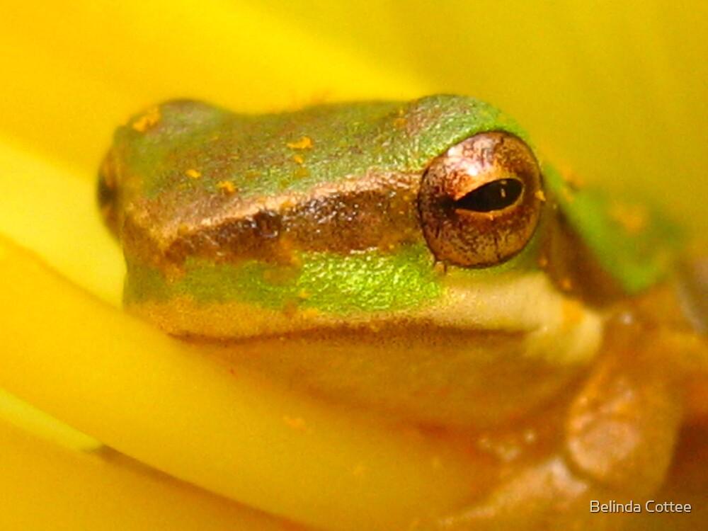huggy froggy by Belinda Cottee
