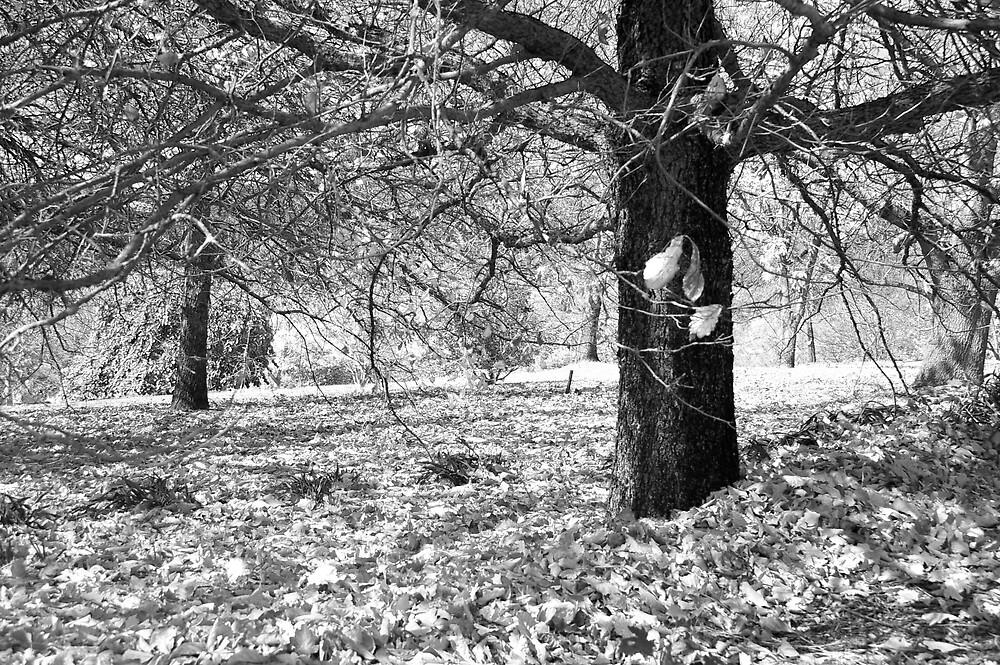 Autumn by Pippa Salaman