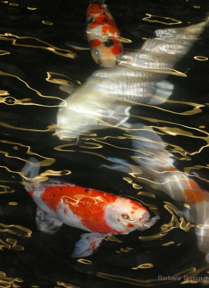 Swimming on Golden Currents by Barbara  Brown