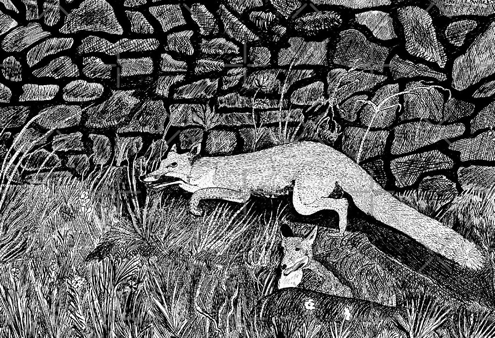39 - FOXES DAVE EDWARDS - INK - 1980 by BLYTHART