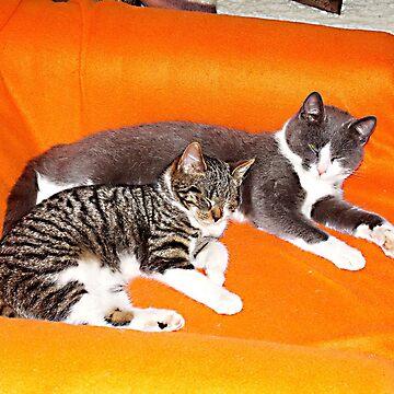 Two thick Wonnepröppchen by voelzis