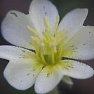 laden petals by budrfli