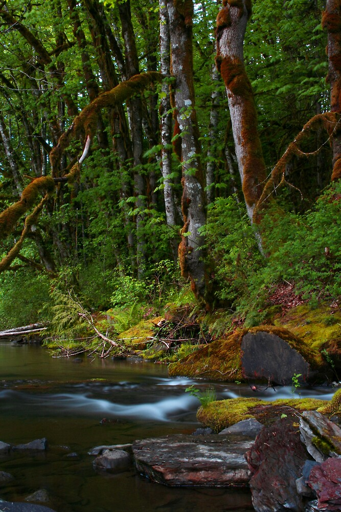 mossy trees by jpjeff