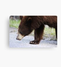Big Paws Canvas Print
