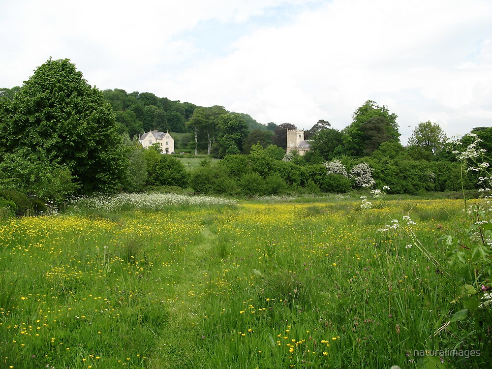 across the meadow to Buckland Newton Church by naturalimages