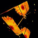 Marigold Flower Fragmented by fantasytripp