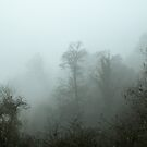 Trees and Mist by Sue Robinson