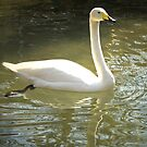 White Goose by jenndes