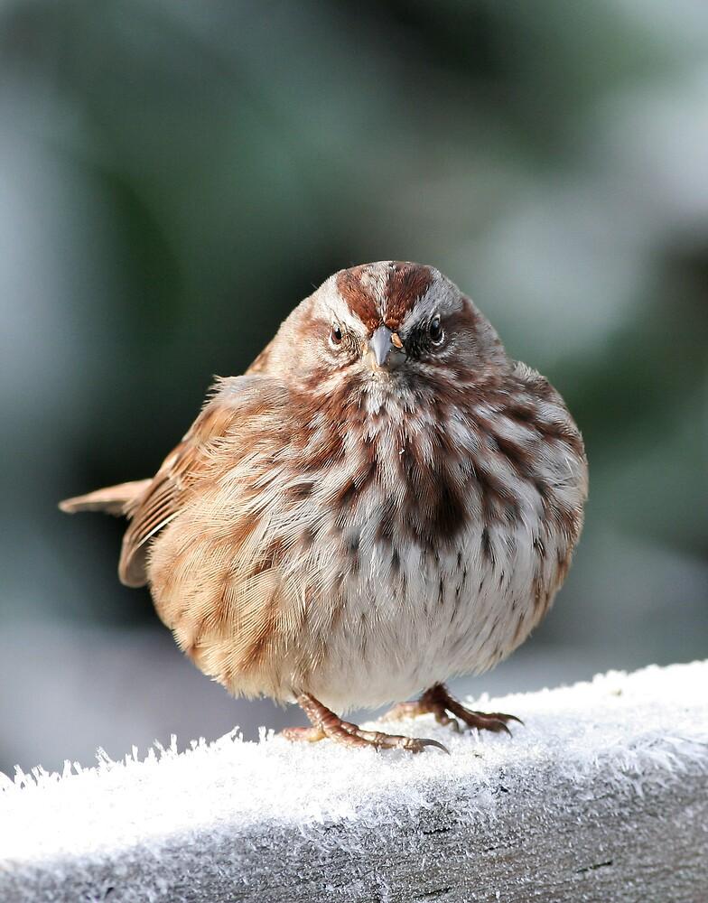 A ball? A bird! by iceeyes