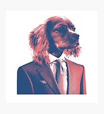 Dog Draper Photographic Print