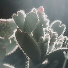 cactus heart by Ingrid Beddoes