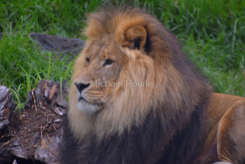 Jungle King by Michael Rowley