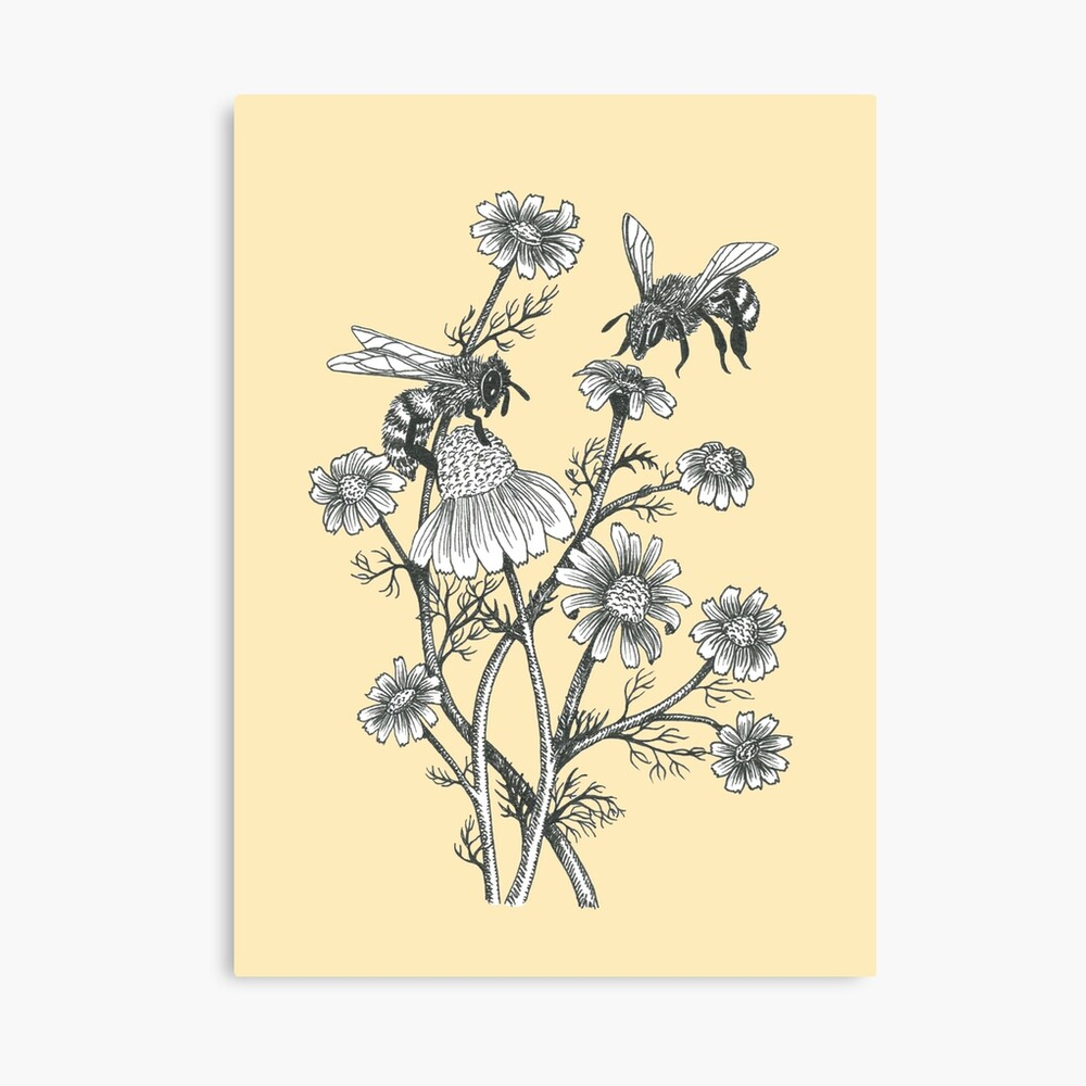 bees and chamomile on honey background  Canvas Print