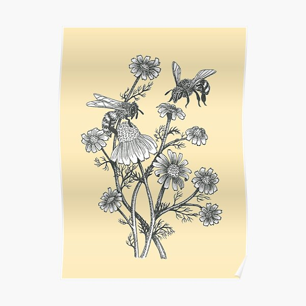 bees and chamomile on honey background  Poster