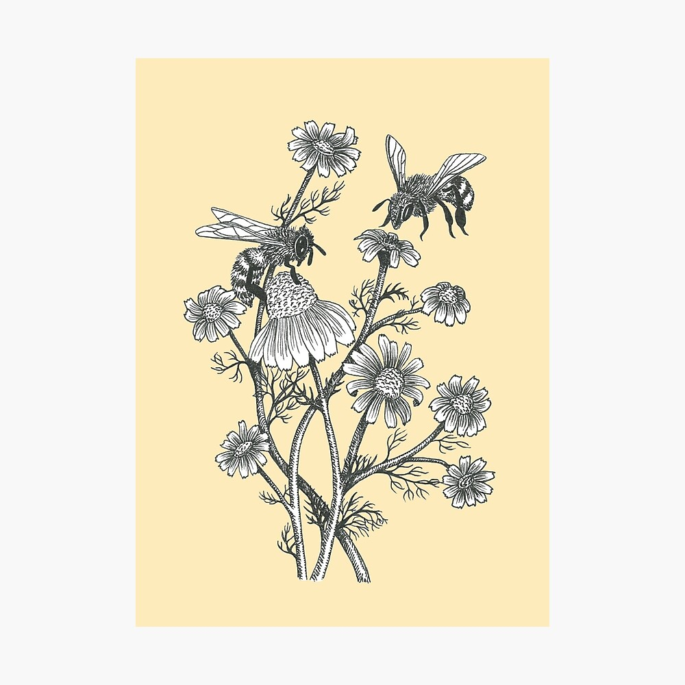 bees and chamomile on honey background  Photographic Print