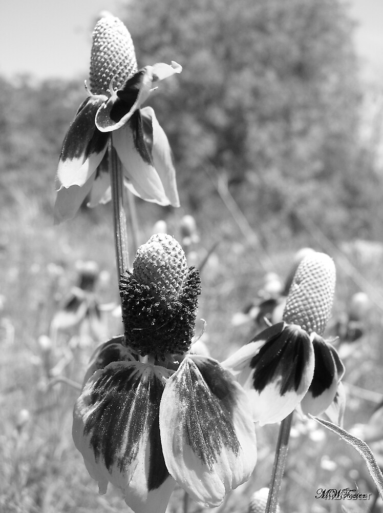 Mexican Hat Group in B&W by mwfoster