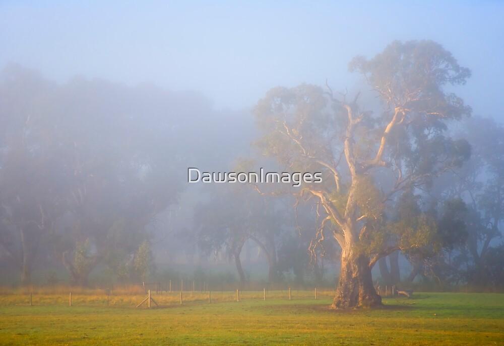 White Gum Sunrise by DawsonImages