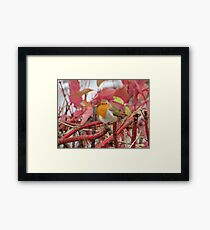 Ireland - Blarney Robin Framed Print