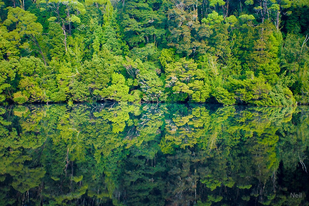 Wilderness Reflects by Neil