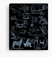 Mammal Chart | Animals Natural History Nature  Canvas Print