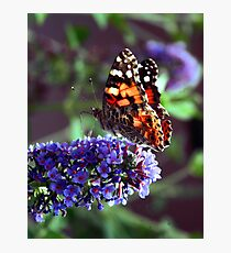 Color Attracting Color Photographic Print