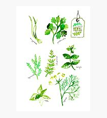 Herbs Photographic Print