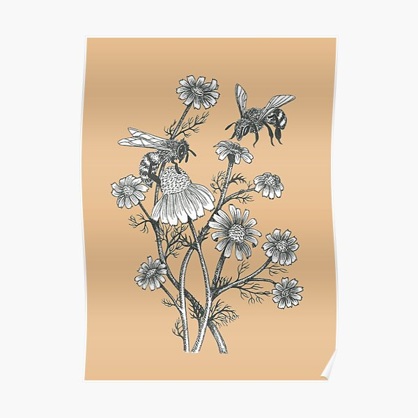 bees and chamomile on caramel background Poster