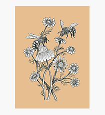 bees and chamomile on caramel background Photographic Print