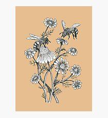 Lámina fotográfica las abejas y la manzanilla en el fondo de caramelo
