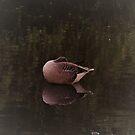 Sitting Duck by Fara