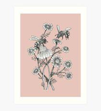 Lámina artística las abejas y la manzanilla en el fondo de color rosa polvoriento