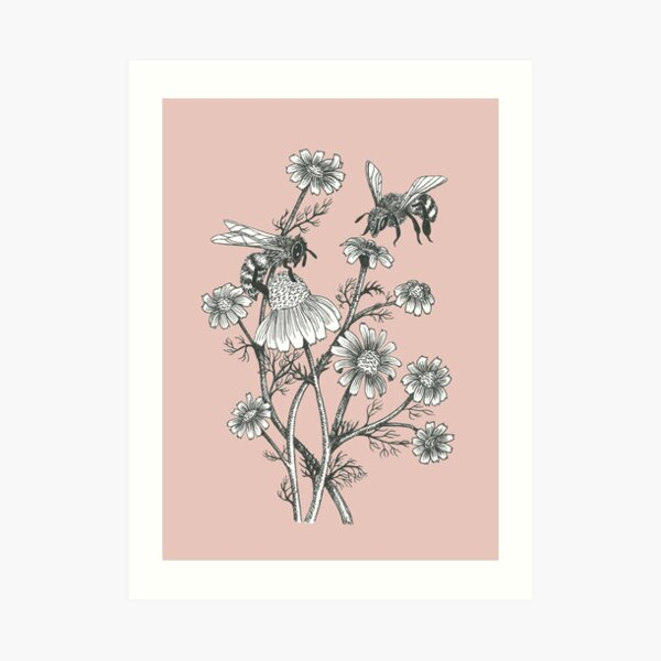 bees and chamomile on dusty pink background Art Print