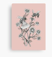 bees and chamomile on dusty pink background Canvas Print