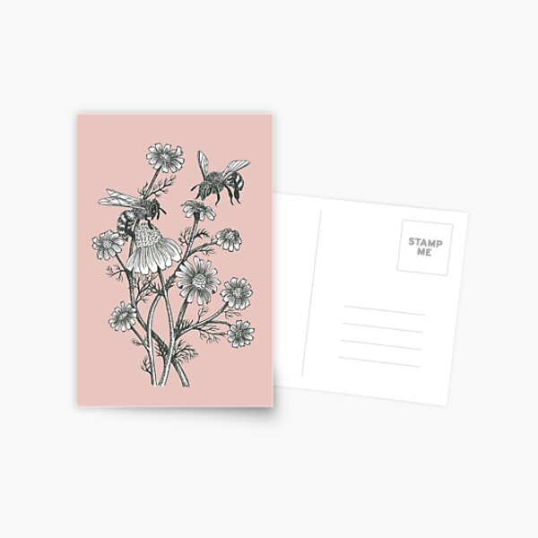 bees and chamomile on dusty pink background Postcard