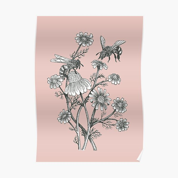 bees and chamomile on dusty pink background Poster