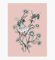 bees and chamomile on dusty pink background Photographic Print