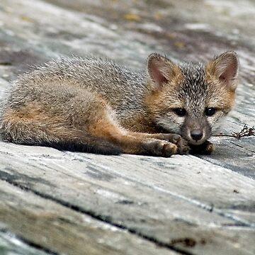 Sleepy Fox Kit by wolftinz