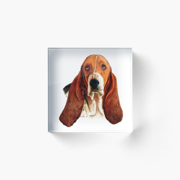 Basset Hound artwork Acrylic Block