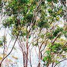 Gum trees by Kim Austin